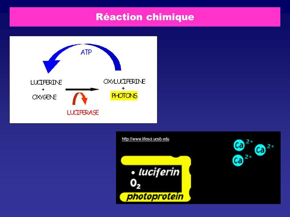Réaction chimique http://www.lifesci.ucsb.edu