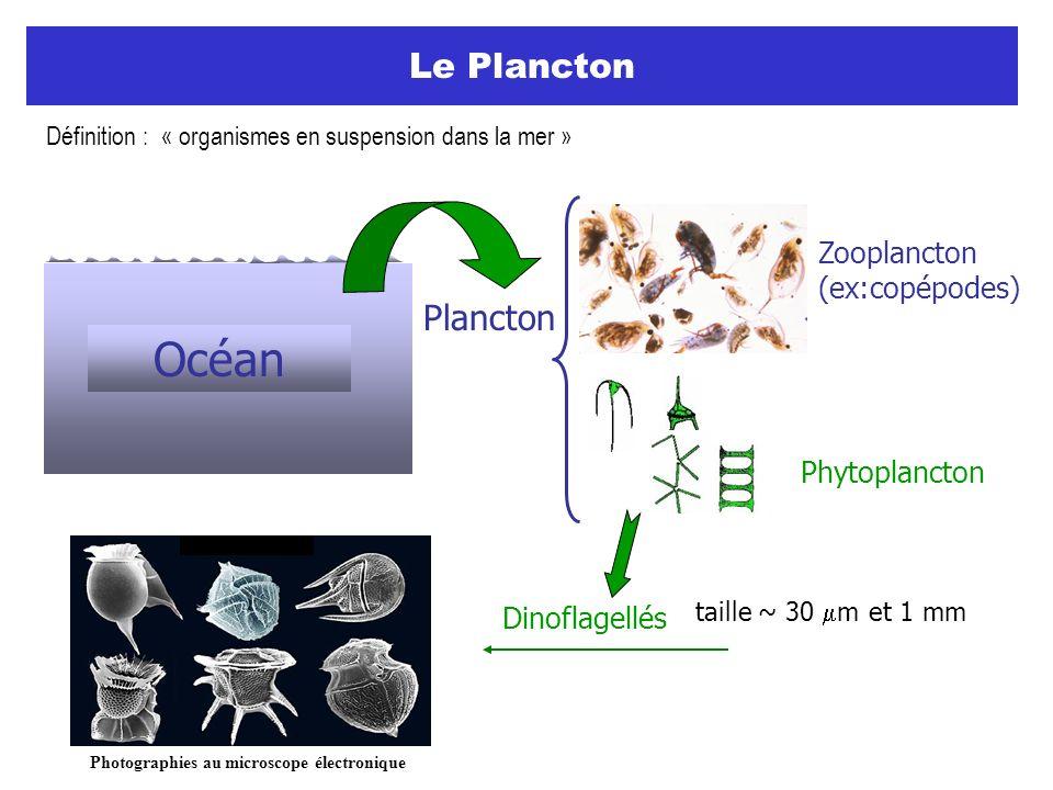 Définition : « organismes en suspension dans la mer »