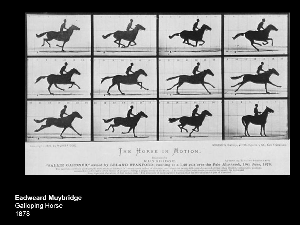 Eadweard Muybridge Galloping Horse 1878