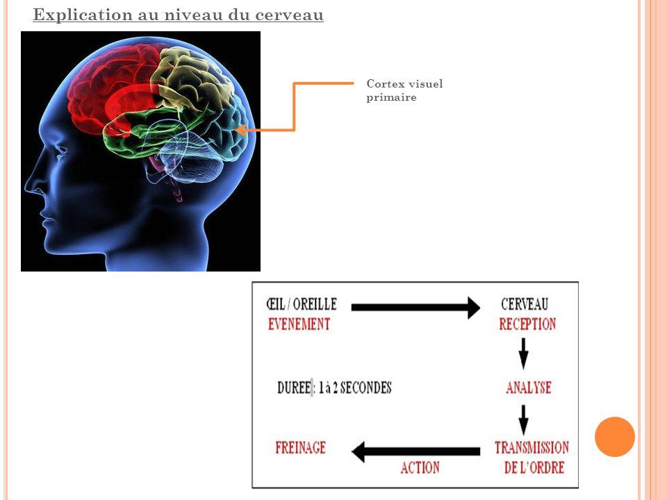 Explication au niveau du cerveau