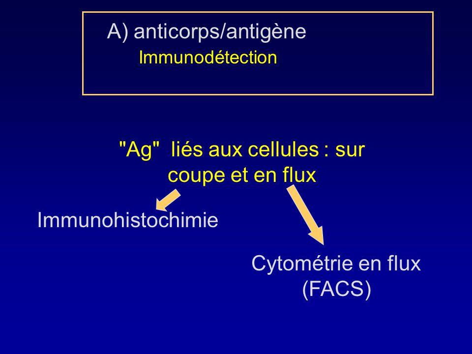 Ag liés aux cellules : sur coupe et en flux