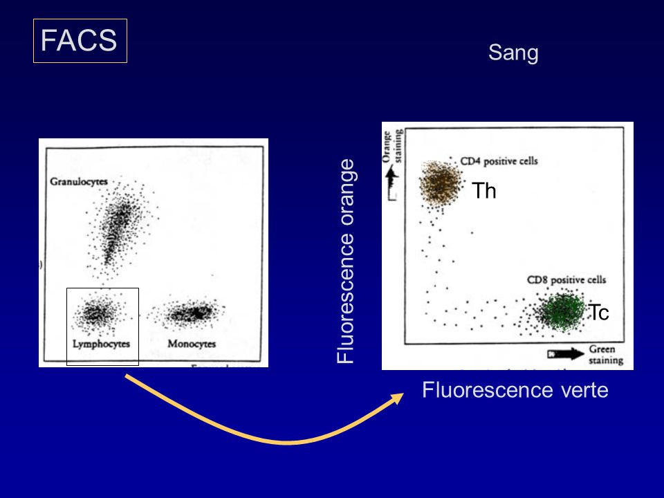 FACS Sang Th Fluorescence orange Tc Fluorescence verte