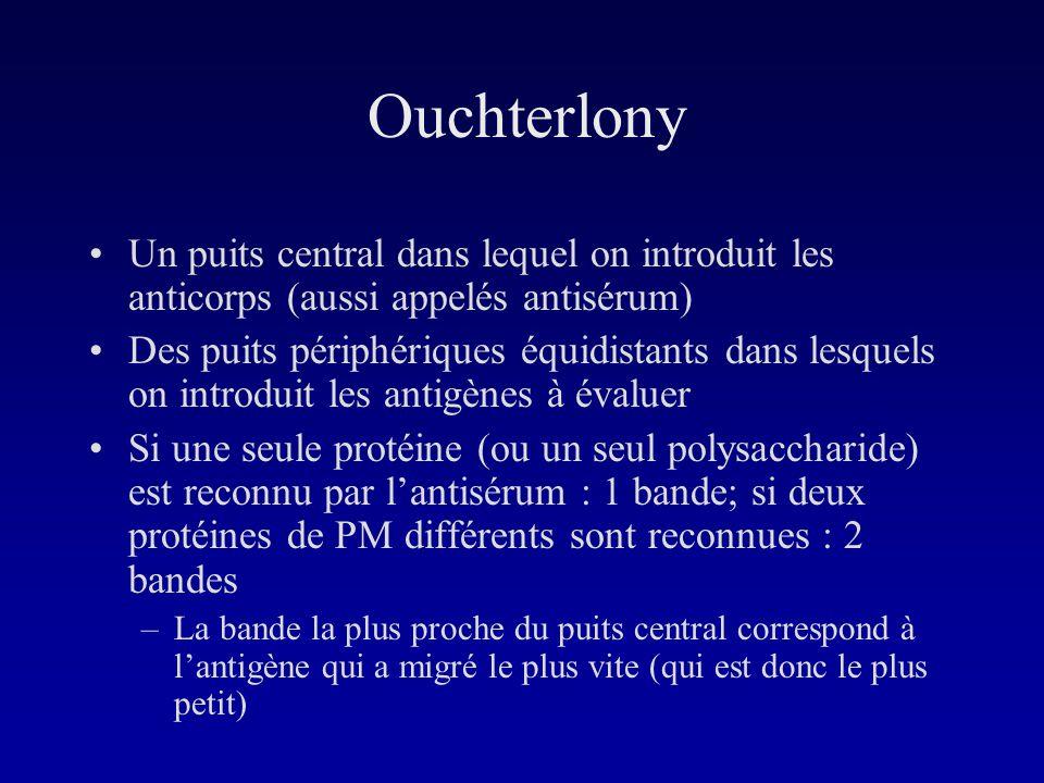 Ouchterlony Un puits central dans lequel on introduit les anticorps (aussi appelés antisérum)