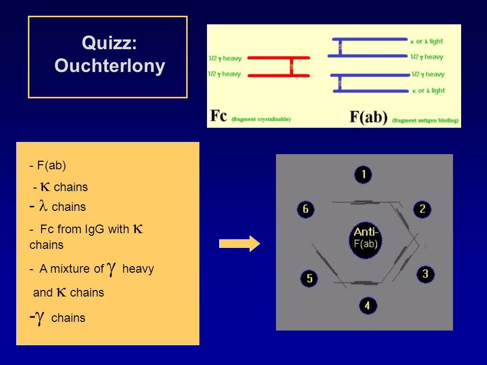 Quizz: Ouchterlony -g chains - l chains - F(ab) - k chains