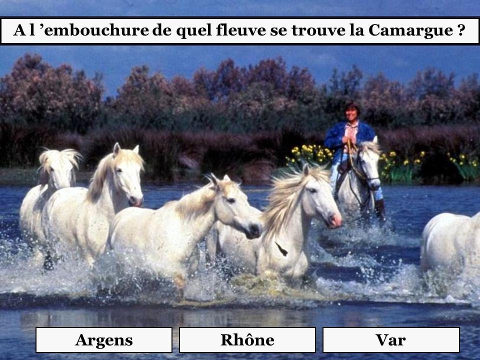 A l 'embouchure de quel fleuve se trouve la Camargue