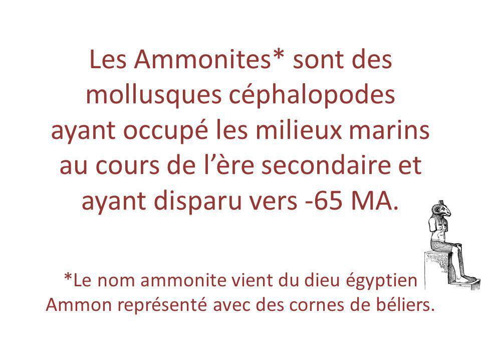 Les Ammonites* sont des mollusques céphalopodes ayant occupé les milieux marins au cours de l'ère secondaire et ayant disparu vers -65 MA.