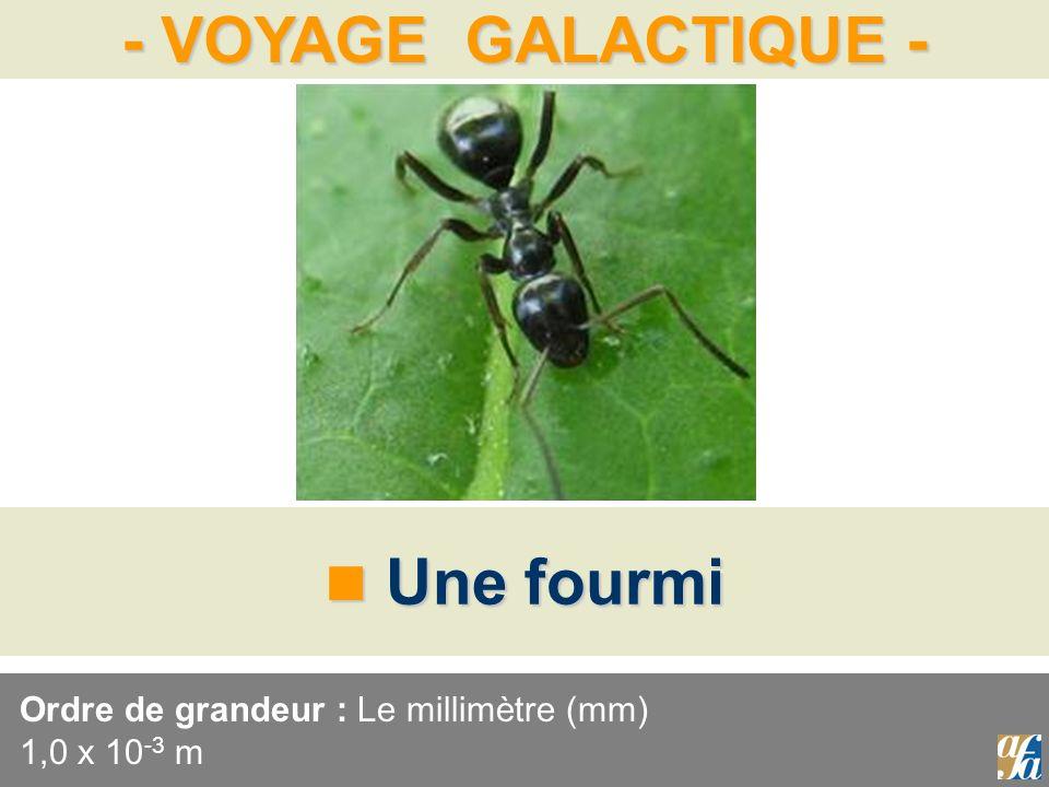 Ordre de grandeur : Le millimètre (mm) 1,0 x 10-3 m