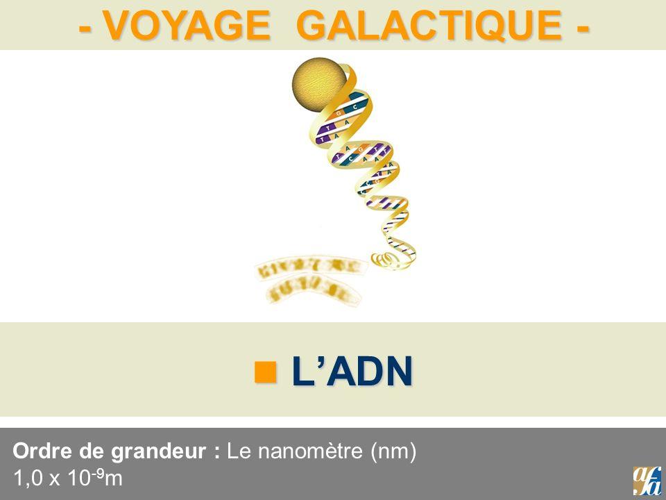 Ordre de grandeur : Le nanomètre (nm) 1,0 x 10-9m