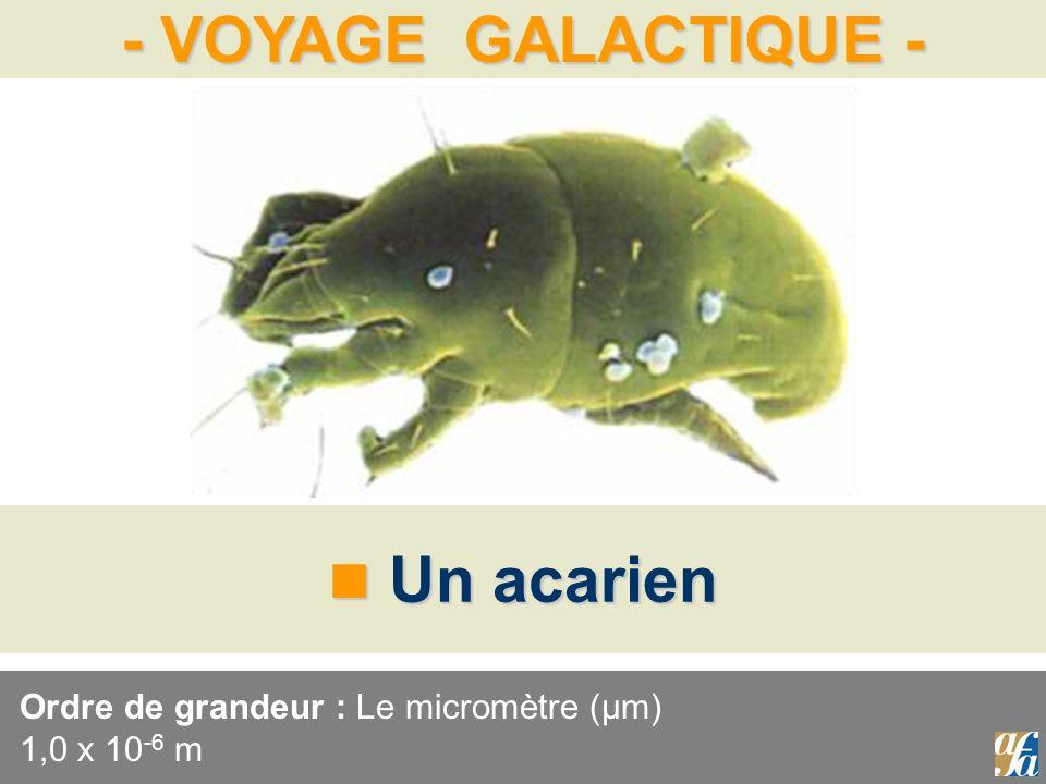Ordre de grandeur : Le micromètre (μm) 1,0 x 10-6 m