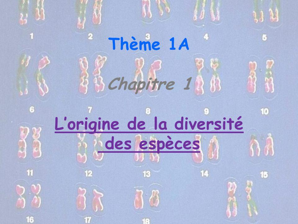 Thème 1A Chapitre 1 L'origine de la diversité des espèces
