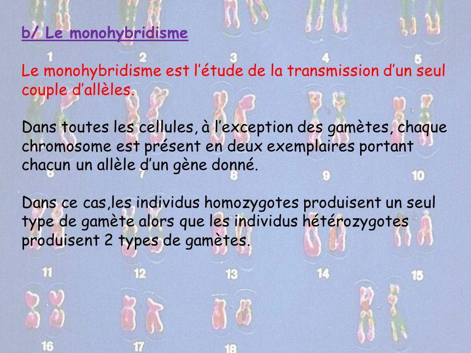 b/ Le monohybridisme Le monohybridisme est l'étude de la transmission d'un seul couple d'allèles.