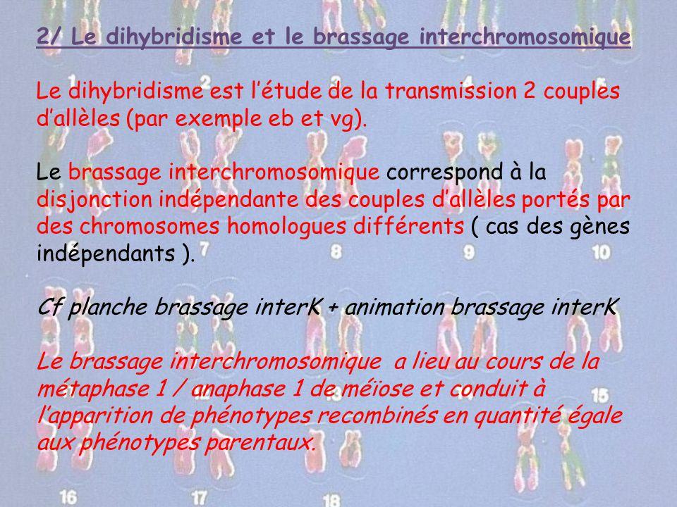 2/ Le dihybridisme et le brassage interchromosomique