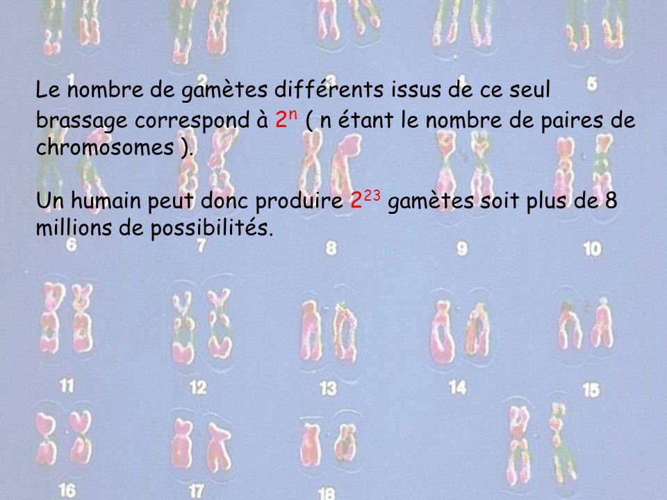 Le nombre de gamètes différents issus de ce seul brassage correspond à 2n ( n étant le nombre de paires de chromosomes ).