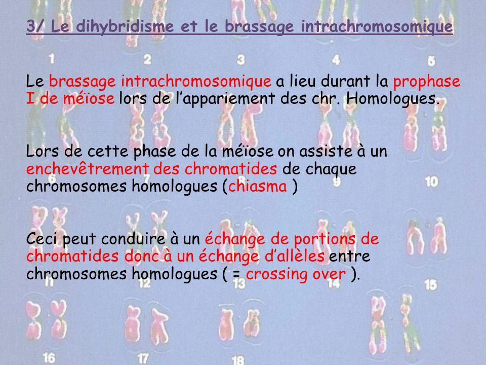 3/ Le dihybridisme et le brassage intrachromosomique