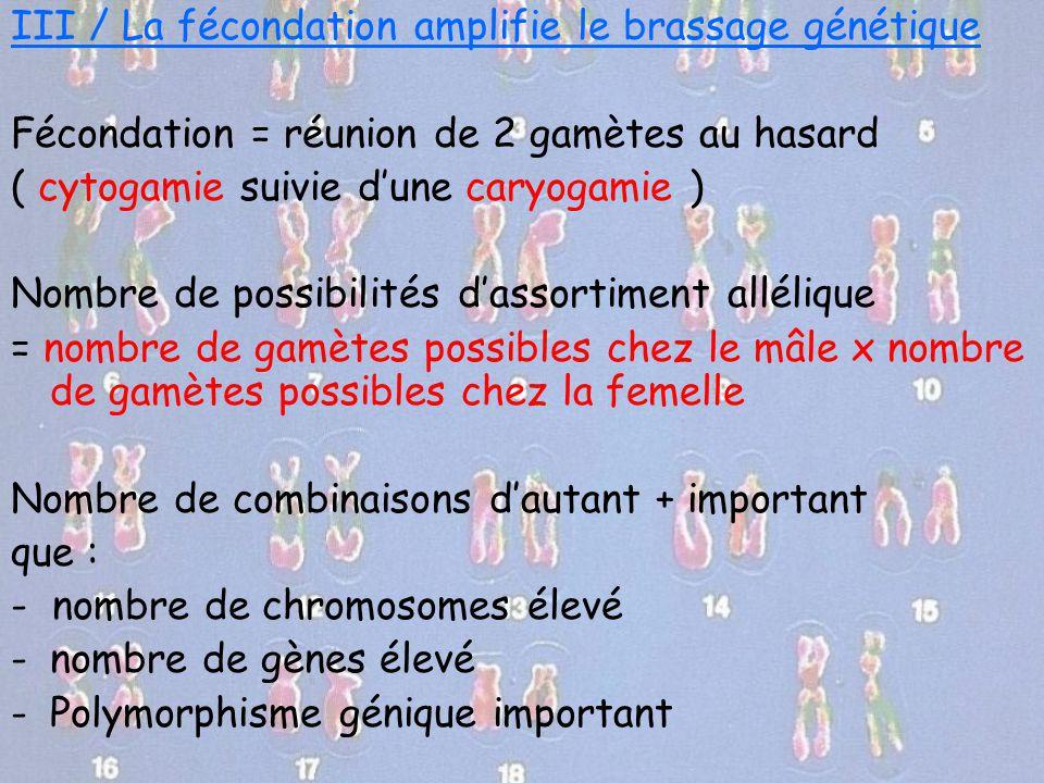 III / La fécondation amplifie le brassage génétique