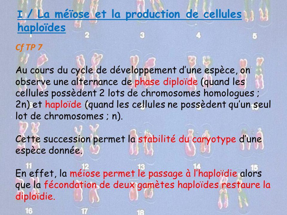 I / La méïose et la production de cellules haploïdes