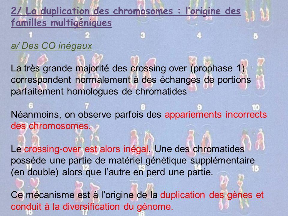 2/ La duplication des chromosomes : l'origine des familles multigéniques