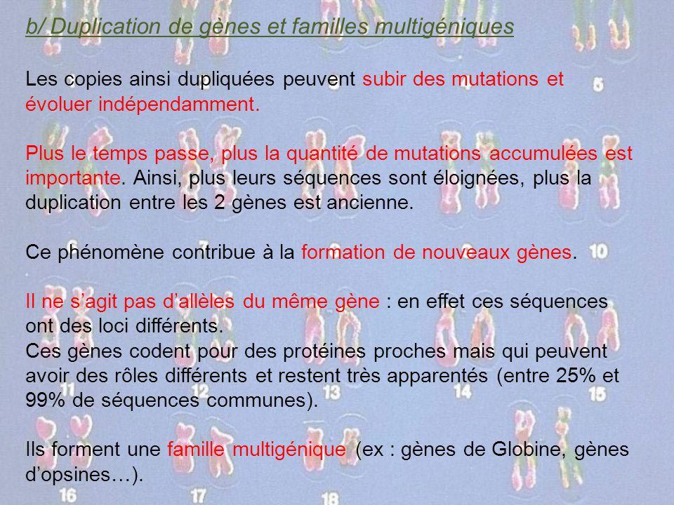 b/ Duplication de gènes et familles multigéniques