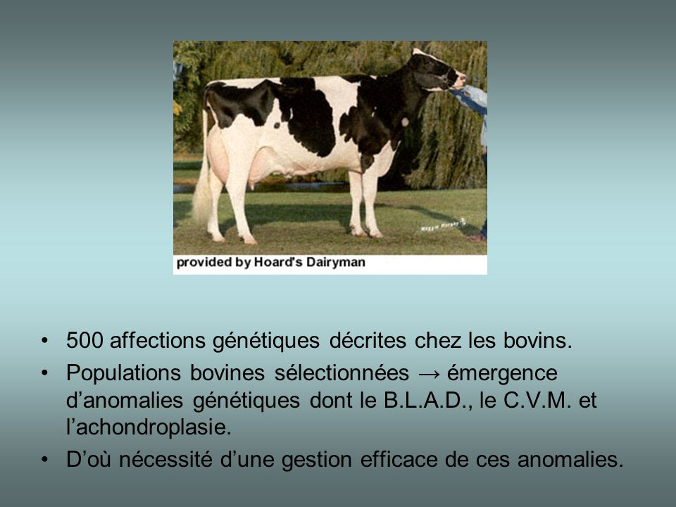 500 affections génétiques décrites chez les bovins.