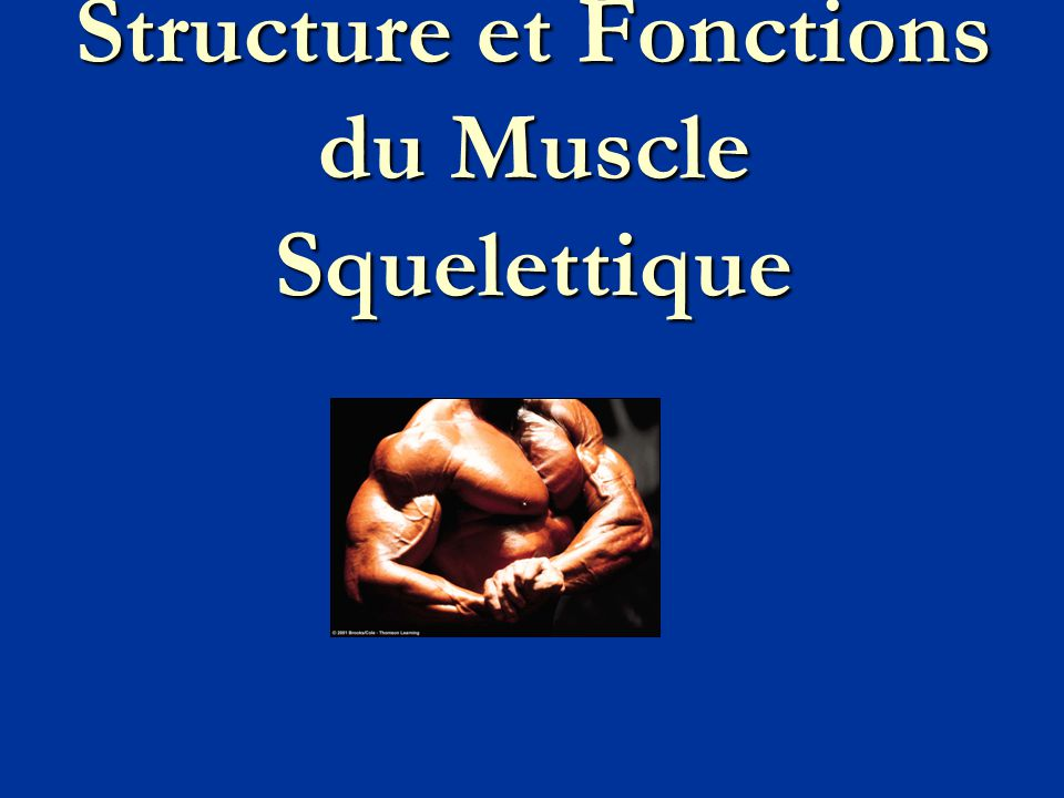 Structure et Fonctions du Muscle Squelettique