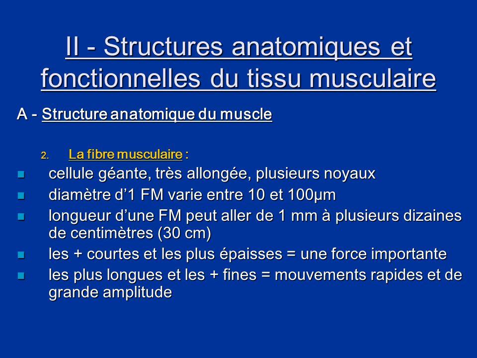 II - Structures anatomiques et fonctionnelles du tissu musculaire