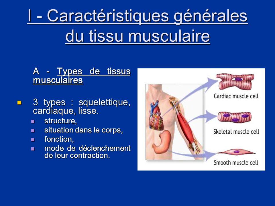 I - Caractéristiques générales du tissu musculaire