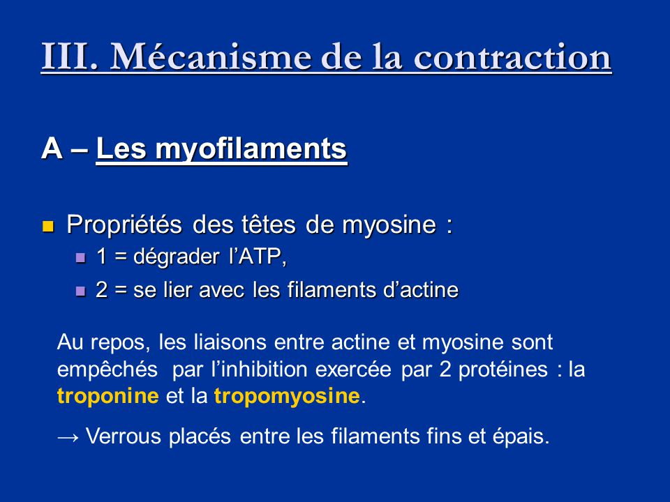 III. Mécanisme de la contraction
