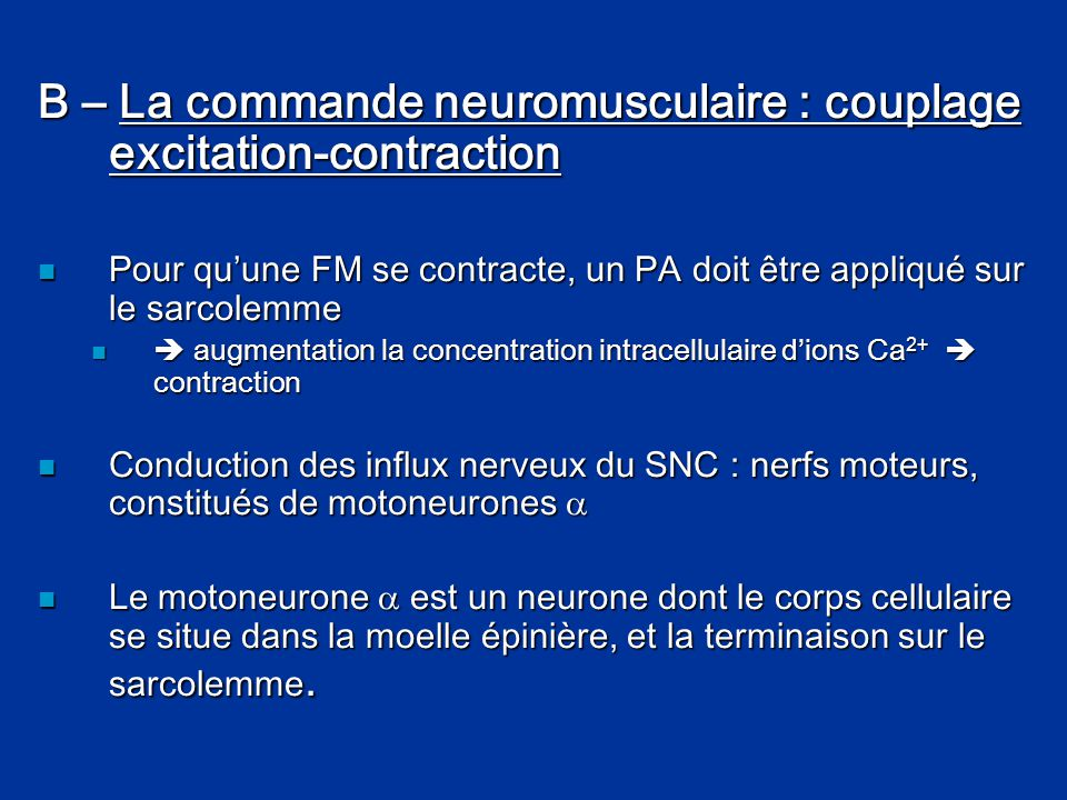 B – La commande neuromusculaire : couplage excitation-contraction