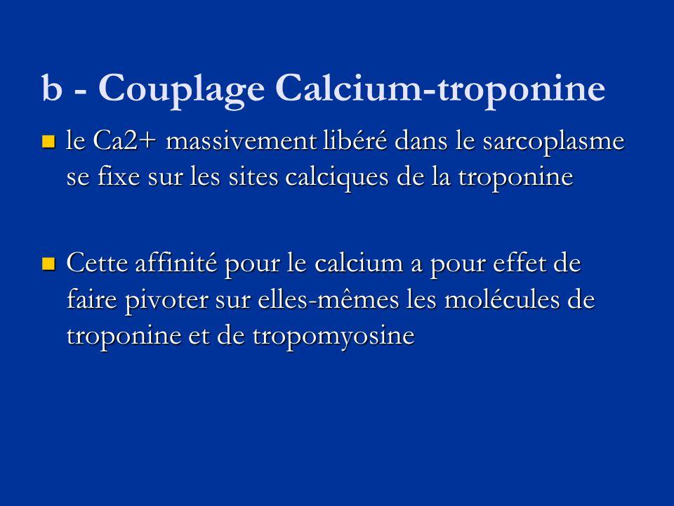 b - Couplage Calcium-troponine