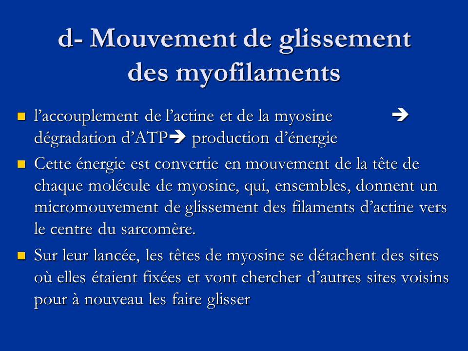 d- Mouvement de glissement des myofilaments