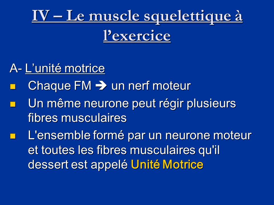 IV – Le muscle squelettique à l'exercice