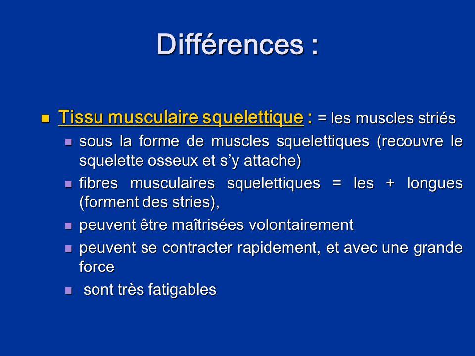 Différences : Tissu musculaire squelettique : = les muscles striés