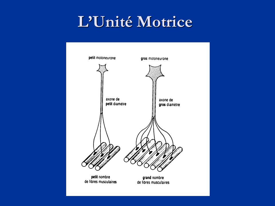 L'Unité Motrice