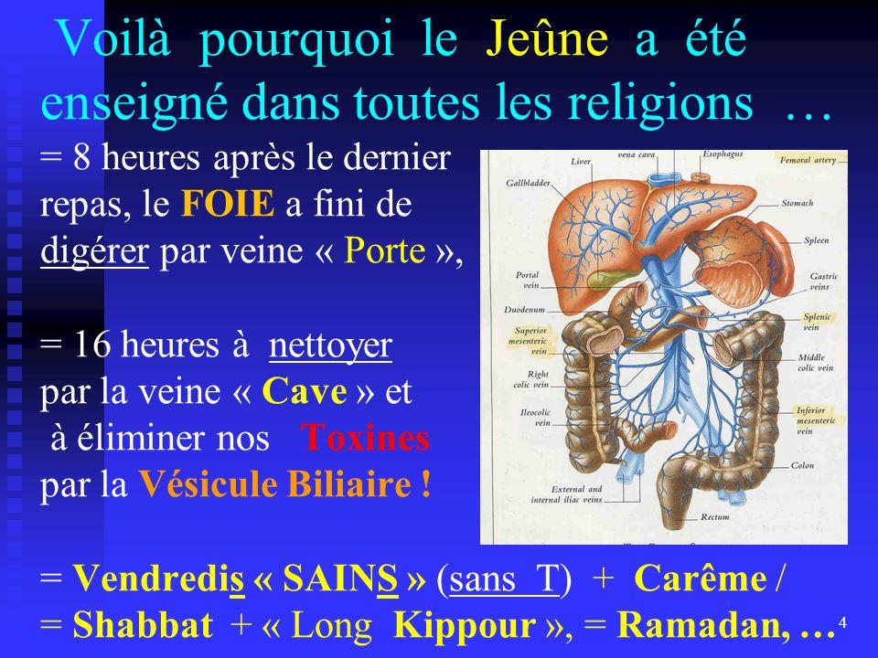Voilà pourquoi le Jeûne a été enseigné dans toutes les religions … = 8 heures après le dernier repas, le FOIE a fini de digérer par veine « Porte », = 16 heures à nettoyer par la veine « Cave » et à éliminer nos Toxines par la Vésicule Biliaire .