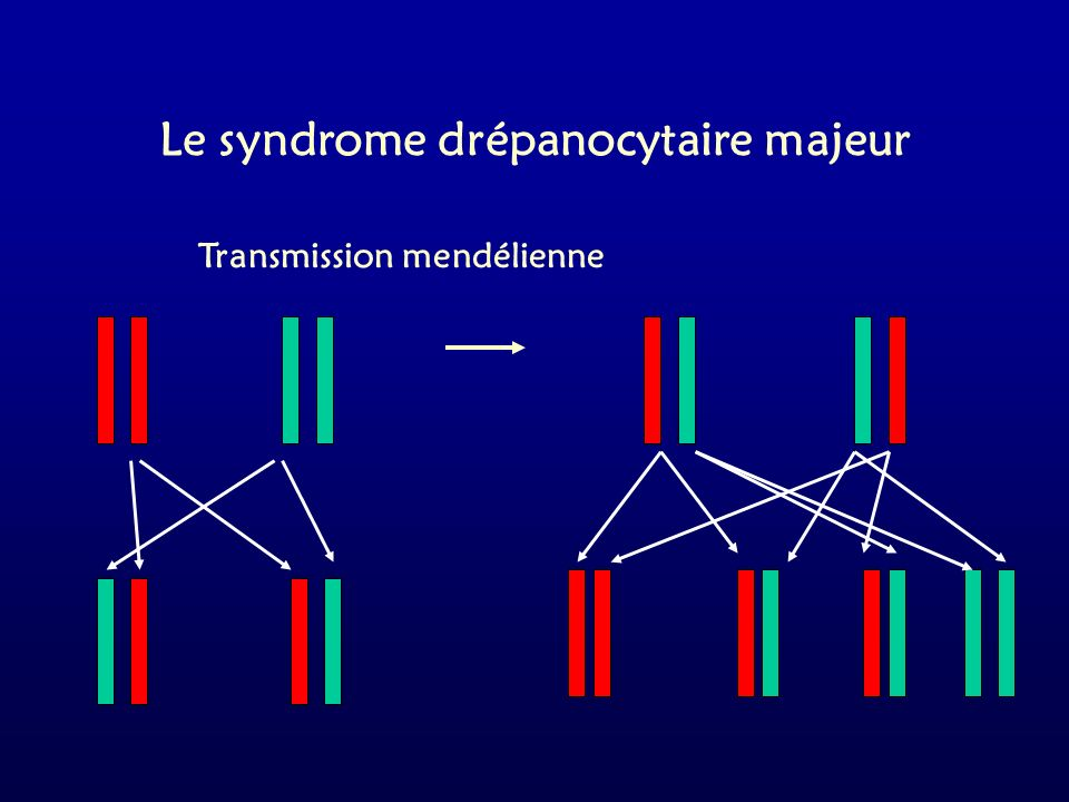 Le syndrome drépanocytaire majeur