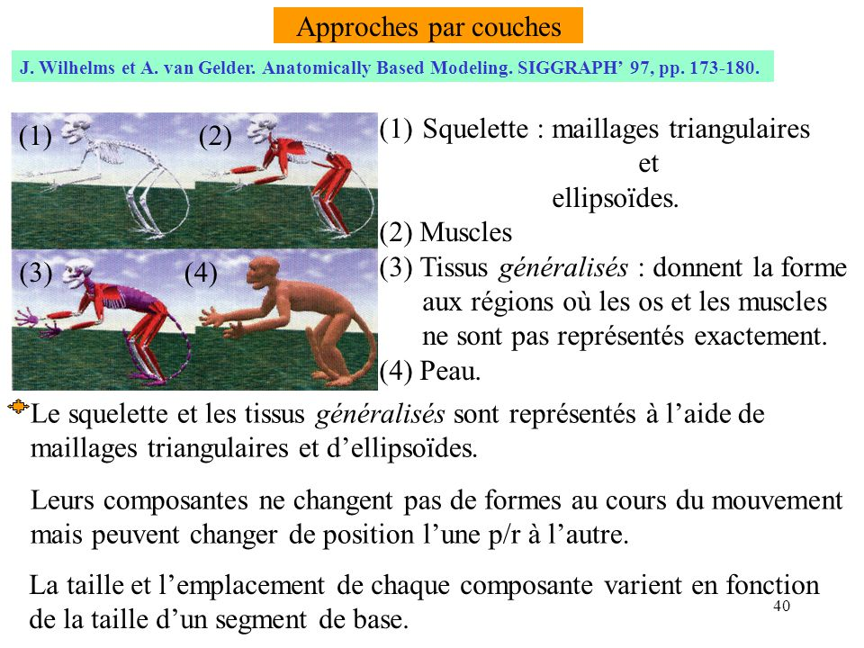 Squelette : maillages triangulaires et ellipsoïdes. (2) Muscles