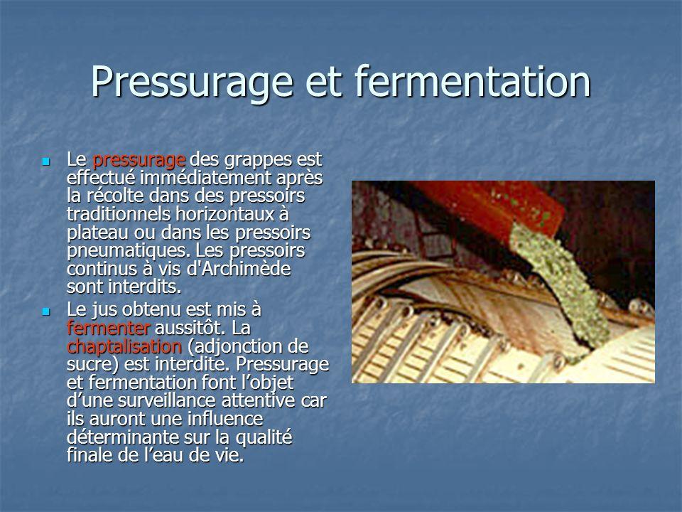 Pressurage et fermentation
