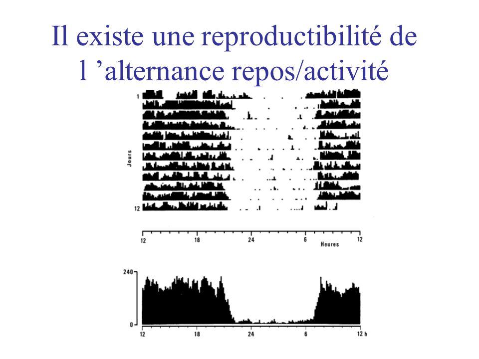 Il existe une reproductibilité de l 'alternance repos/activité