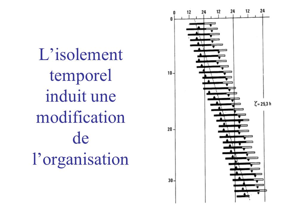 L'isolement temporel induit une modification de l'organisation