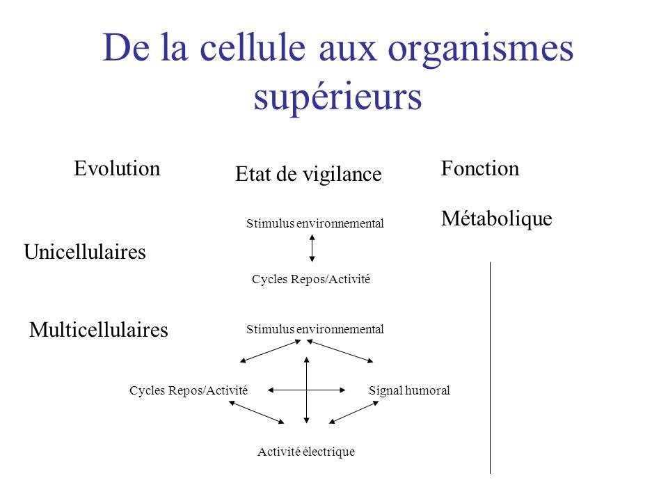 De la cellule aux organismes supérieurs