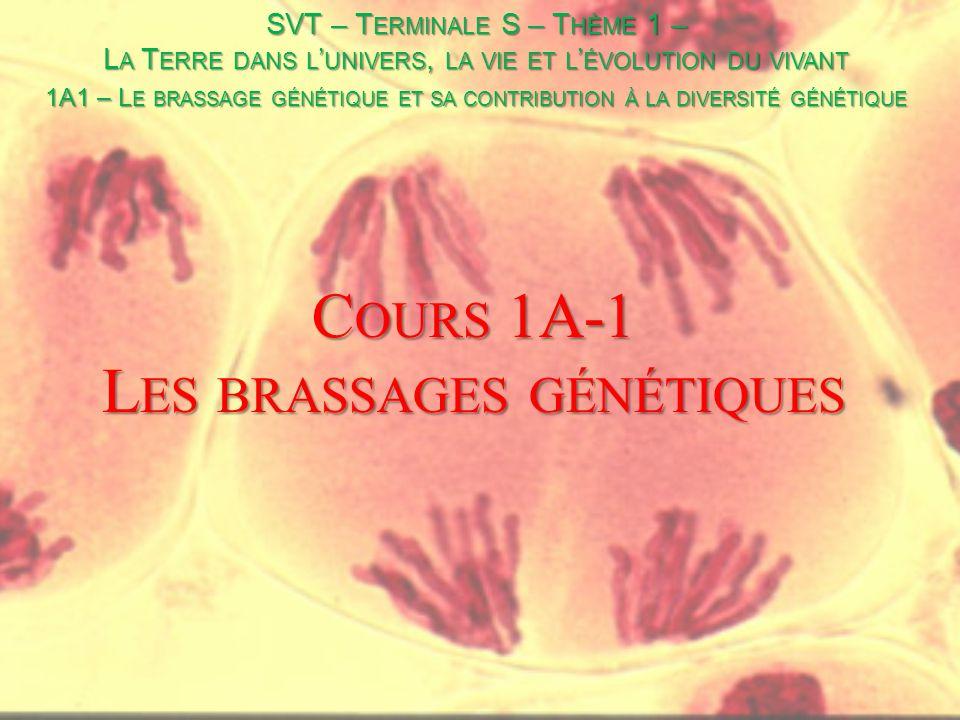 Cours 1A-1 Les brassages génétiques