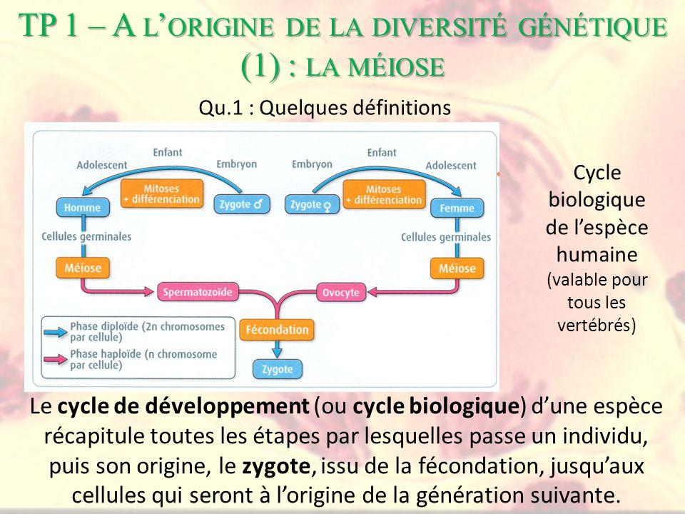 TP 1 – A l'origine de la diversité génétique (1) : la méiose