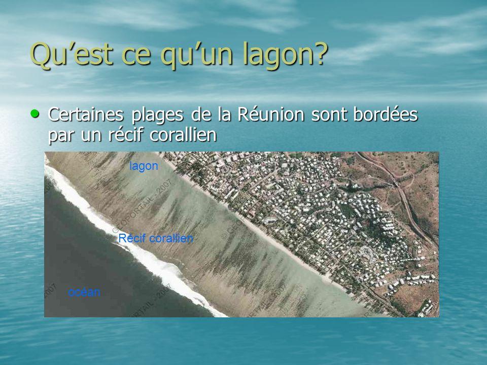 Qu'est ce qu'un lagon Certaines plages de la Réunion sont bordées par un récif corallien. lagon. Récif corallien.