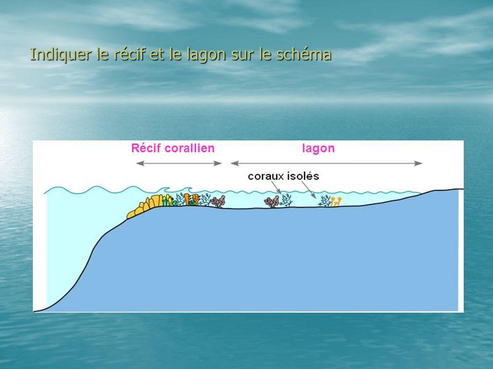 Indiquer le récif et le lagon sur le schéma