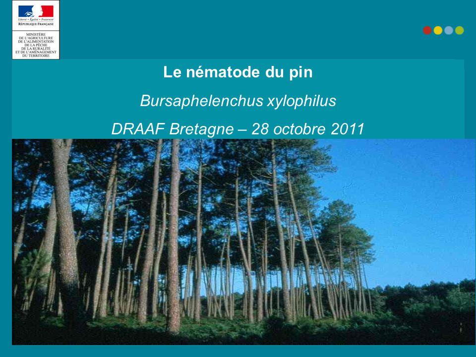 Bursaphelenchus xylophilus DRAAF Bretagne – 28 octobre 2011