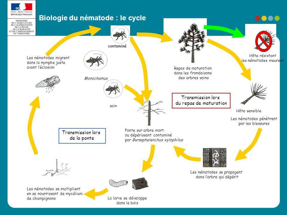 Biologie du nématode : le cycle