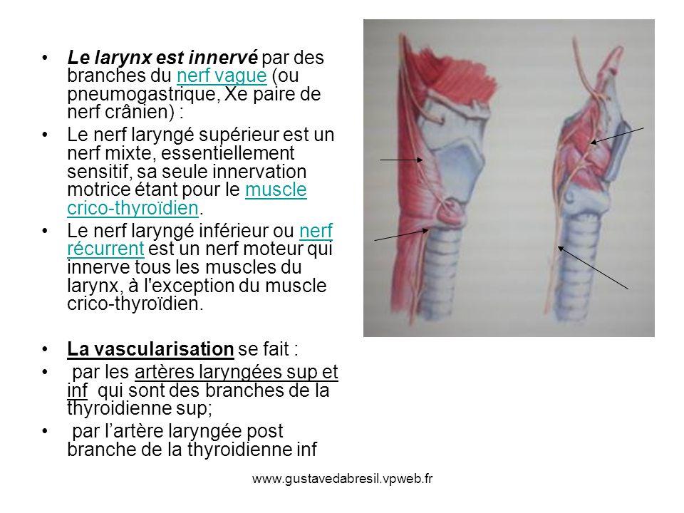 La vascularisation se fait :