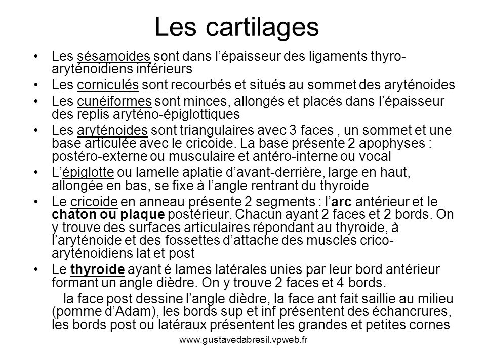 Les cartilages Les sésamoides sont dans l'épaisseur des ligaments thyro-aryténoidiens inférieurs.