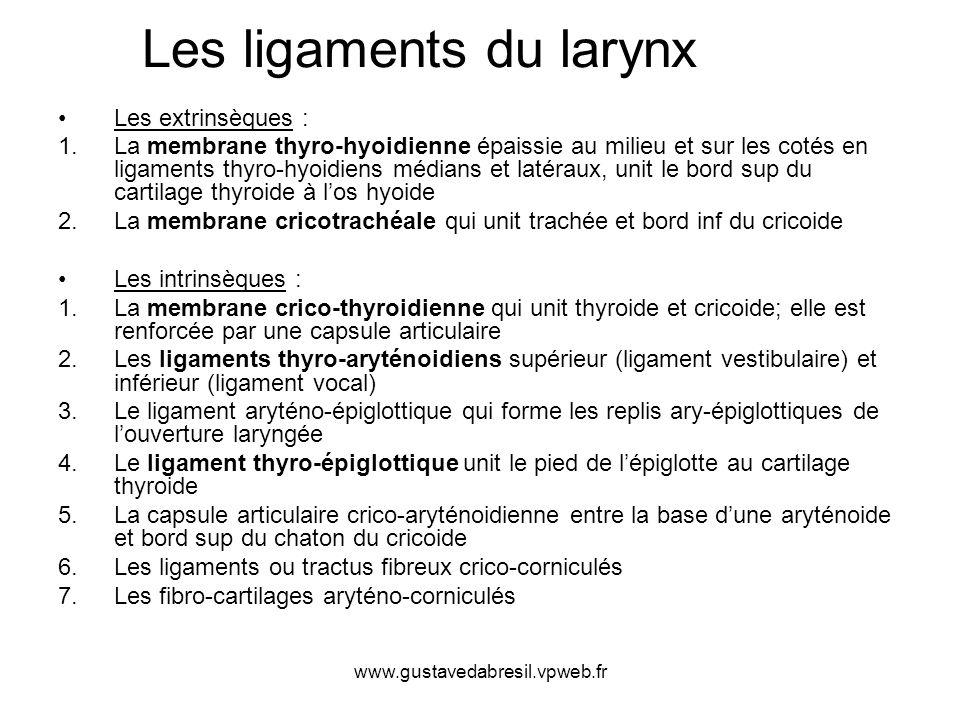 Les ligaments du larynx