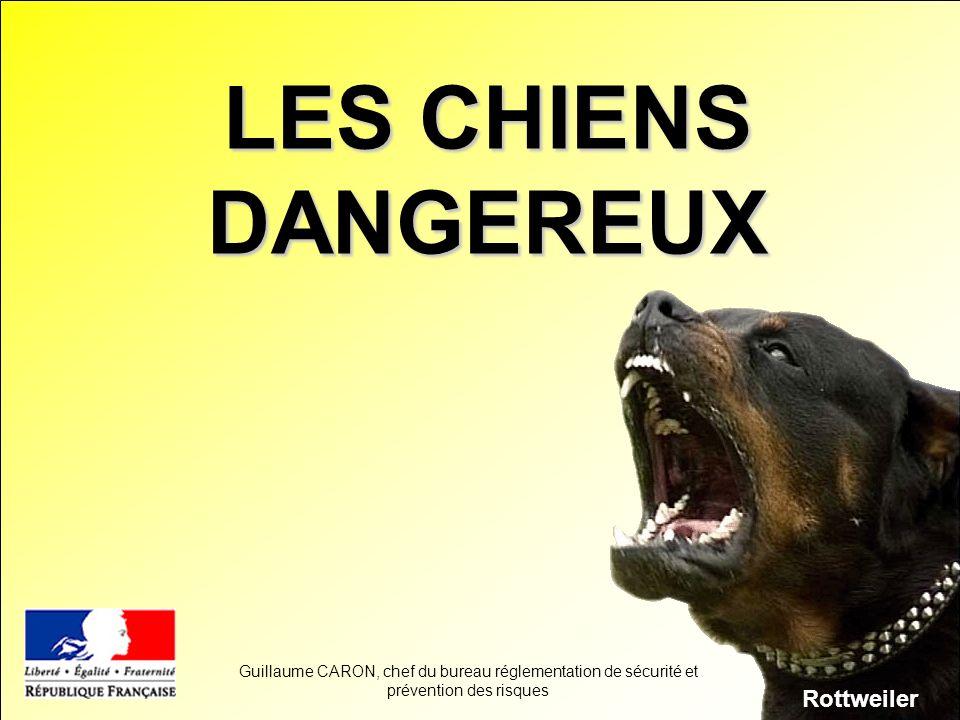 LES CHIENS DANGEREUX Rottweiler